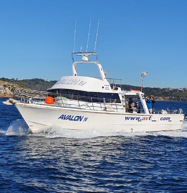 Avalon 55ft